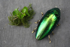 Beetle brooch - Green