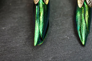 Beetle Earrings (with real beetle shells!)