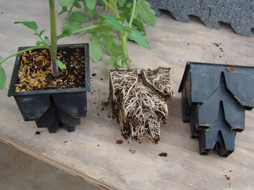 Species and Spacing in RootMaker® Propagation Containers