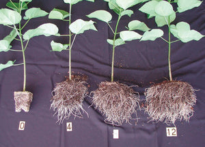 Roots: Key to Improving Efficiency of Organics