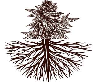 Building Strong Roots - Guide to Growing Hemp and Cannabis