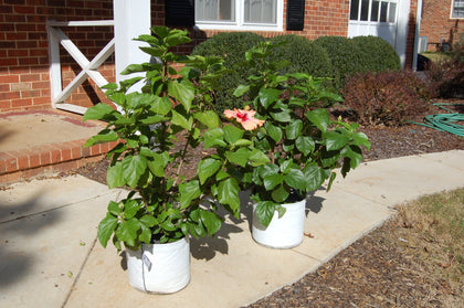 Patio RootTrapper® Containers
