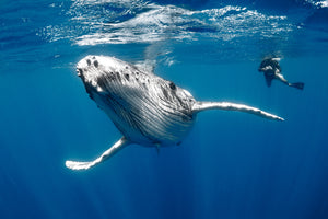 Checkout this amazing video featuring humpback whale songs.