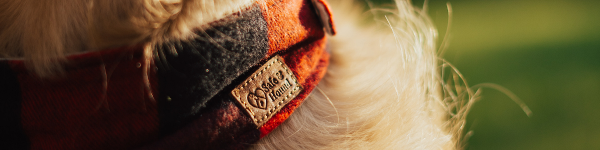 Close shot of a red and black plaid bandanna with a tan leather logo that reads Safe and Hound on a blonde dog with grass in background.