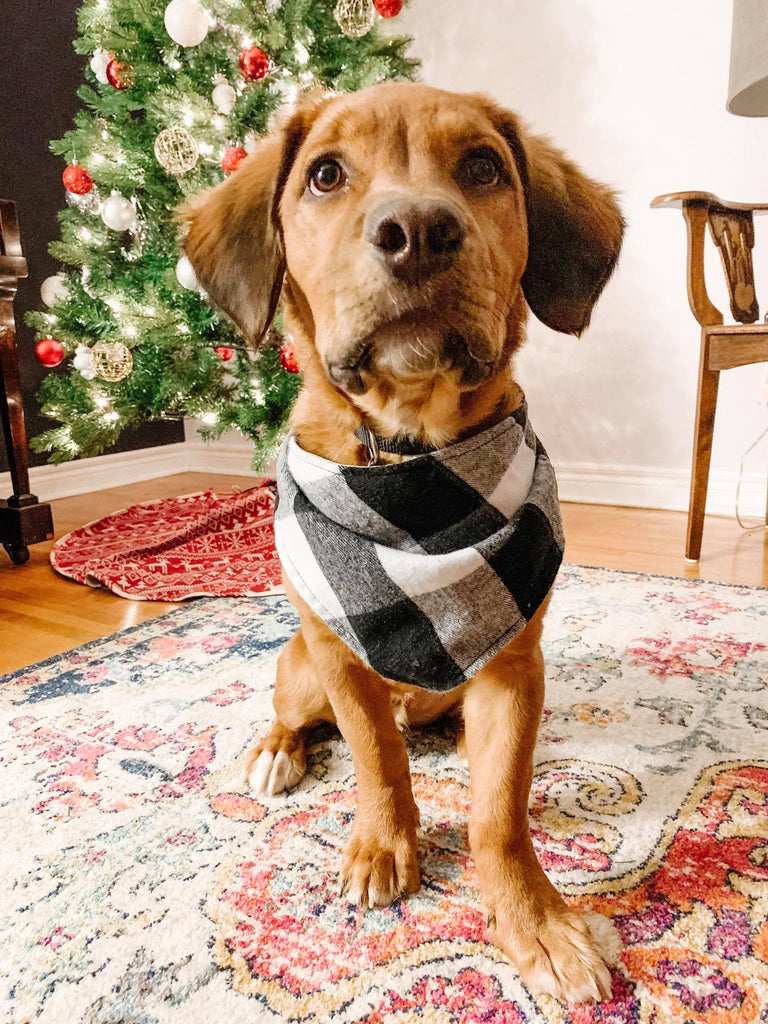Flannel Snap Bandanna in Black/White Buffalo Check Plaid