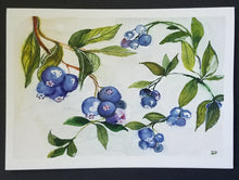 Load image into Gallery viewer, Blueberry Card