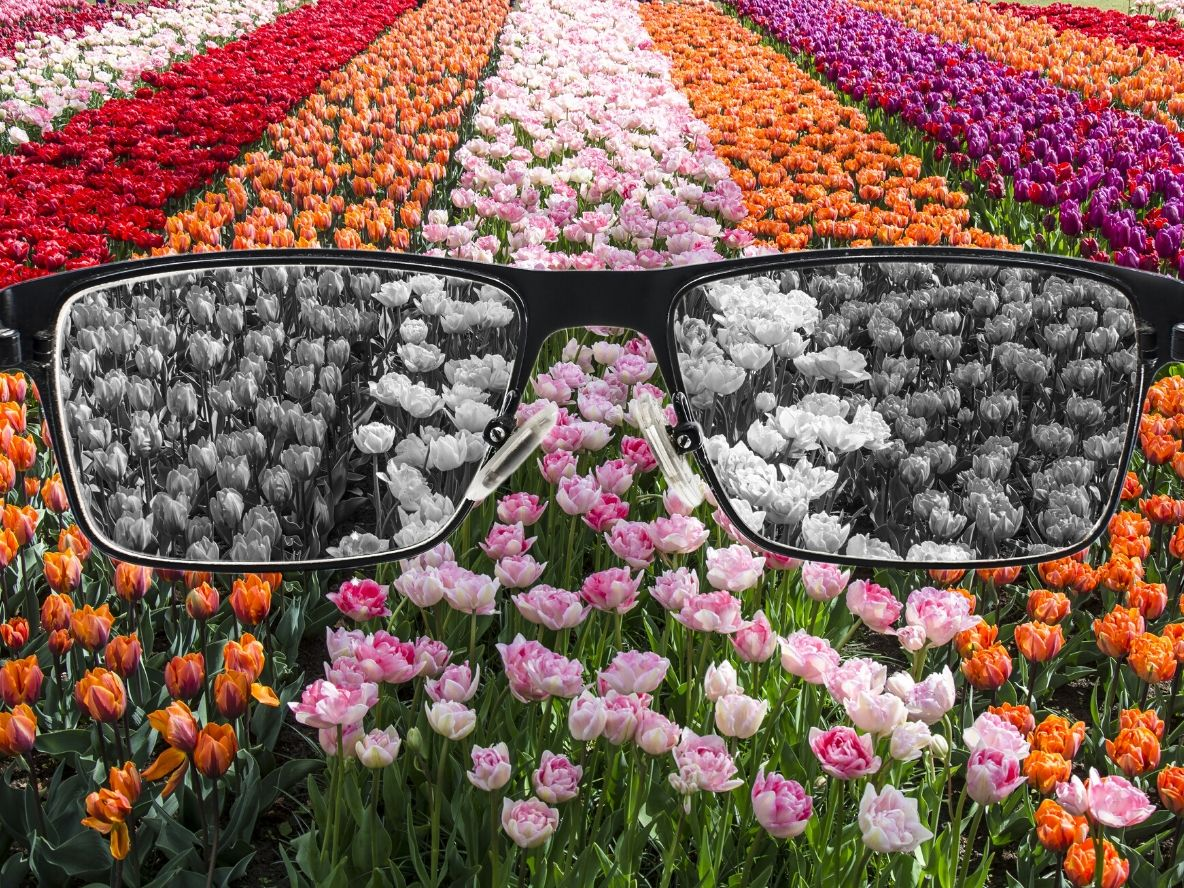 How Color-Blind Corrective Glasses Work