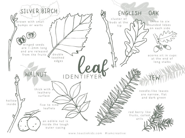 COLOUR AND CREATE | LEAF IDENTIFIER