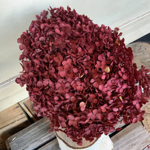 Load image into Gallery viewer, Dried Hydrangea