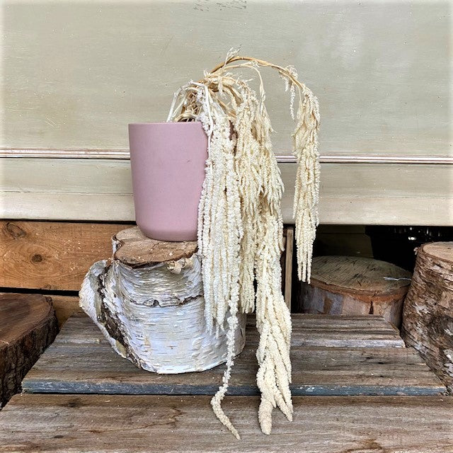 Dried Hanging Amaranthus