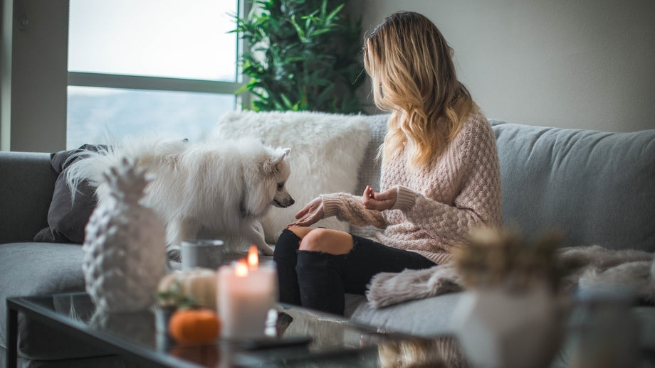 person sitting on a cozy couch with their dog