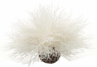 biOrb Aquatic Sea Lily White *REPL 227093