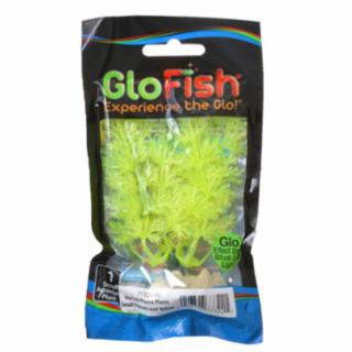 Tetra GloFish Plant, Small Yellow *REPL 309326