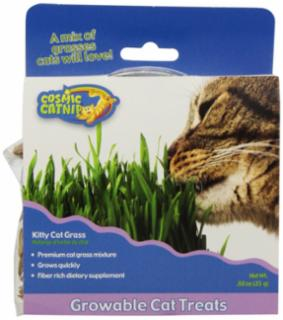 Cosmic Kitty Cat Grass