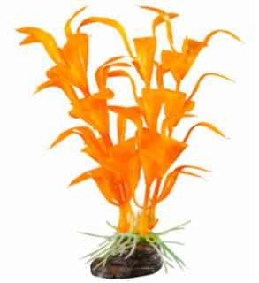 Elive Glow Elements Neon Tangerine Ludwigia - Small - 4 in.