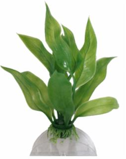 Deep Blue Plant Amazon Sword Small