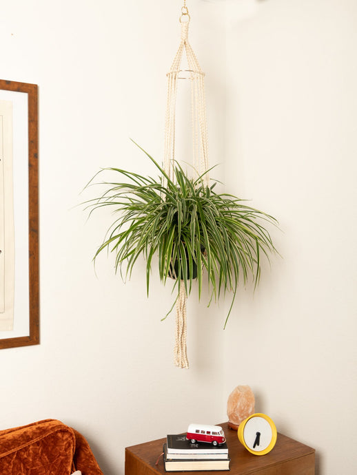 The Dolly Macrame Plant Hanger