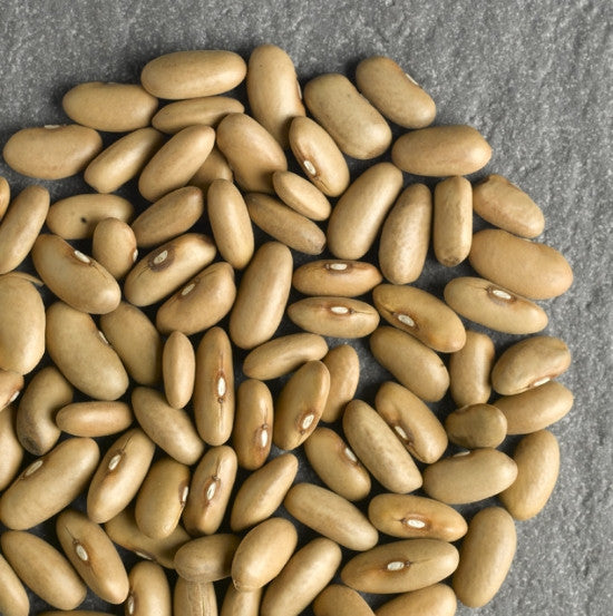 Arikara Yellow Bean Bulk