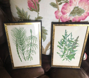 Pair of Framed Prints (2)