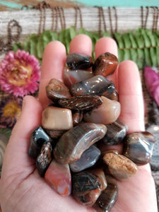 Petrified Wood // Tumbled Stones // Polished Crystals // 1 Piece