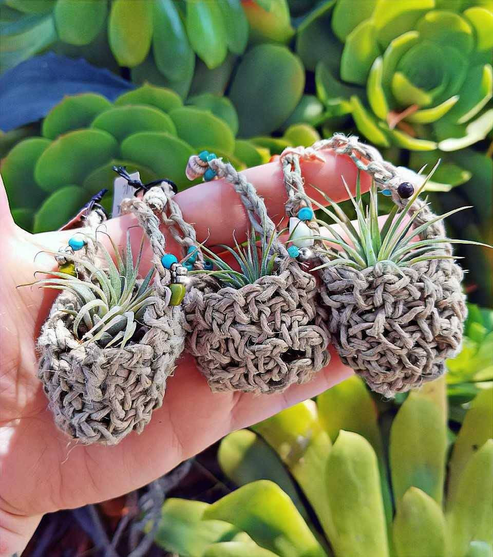 Living Airplant Necklace // Crochet Hemp // Beaded // Shells // Moss // Tillandsia