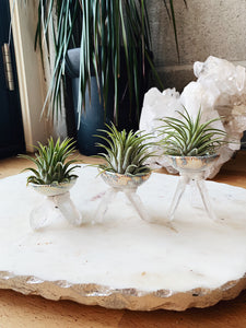 Crystal Air Plant Holder