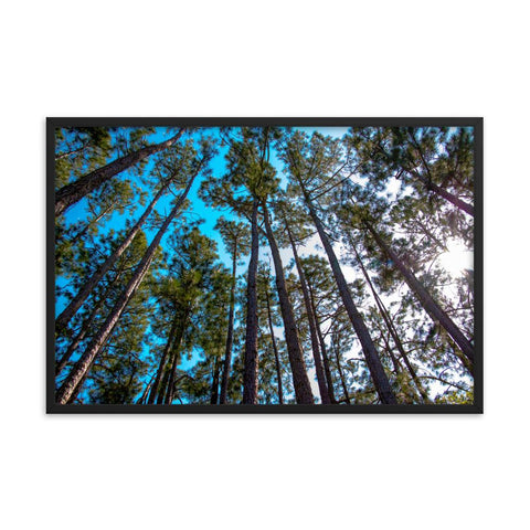 Tree Line Sky View Framed Photo Print Colorful Home Decor