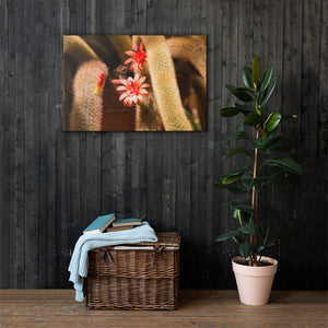 Orange Pink Cactus Flower - Canvas Print