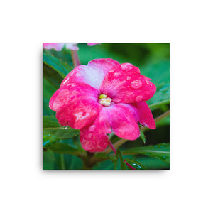 Pink Flower with Water Drops - Canvas Print