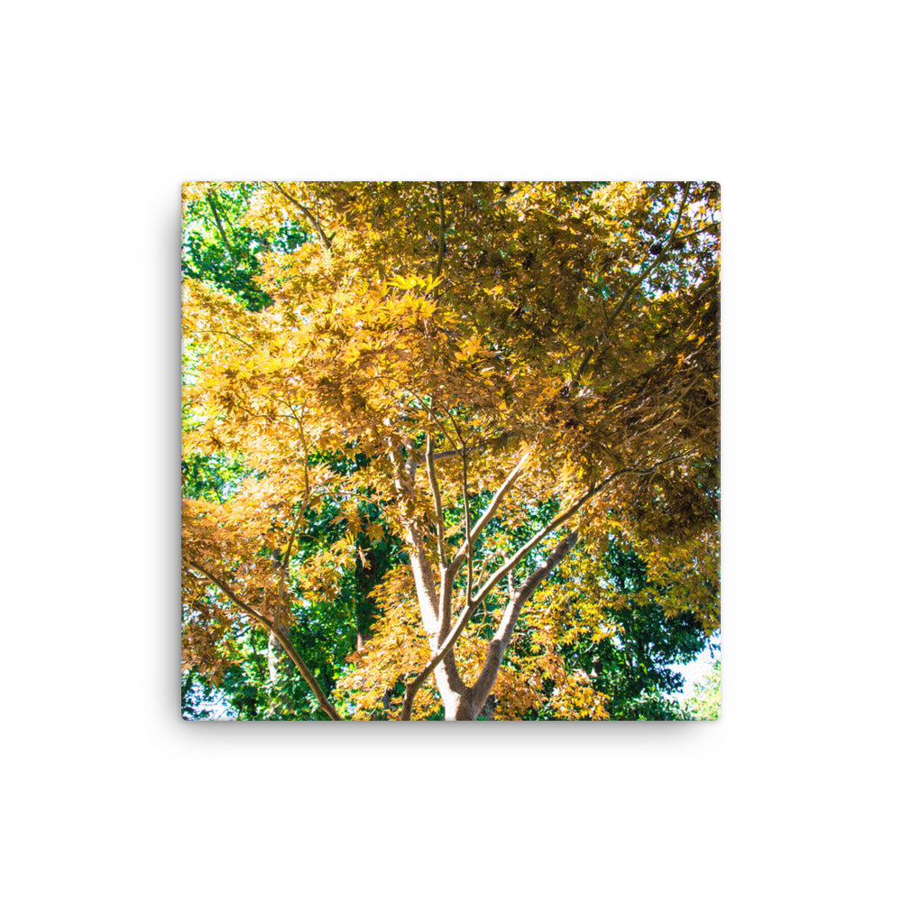 Yellow Tree in Green Forest - Canvas Print