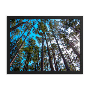 Tree Line Sky View - Framed Print