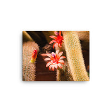 Load image into Gallery viewer, Orange Pink Cactus Flower - Canvas Print