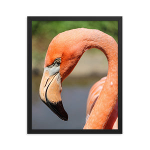 Flamingo Photo - Framed Print