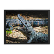 Load image into Gallery viewer, Alligator Photo - Wildlife - Framed Print