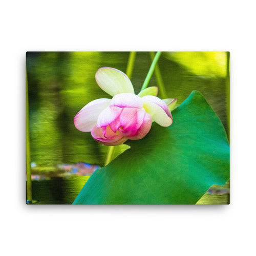 Pink Flower Water Lily Reflection - Canvas Print