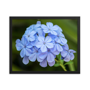 Blue Flowers - Framed Print