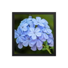 Load image into Gallery viewer, Blue Flowers - Framed Print