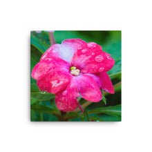 Load image into Gallery viewer, Pink Flower with Water Drops - Canvas Print