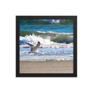 Seagull Flying Beach - Ocean Waves - Framed Print