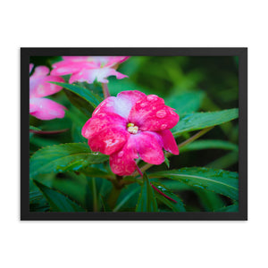 Bright Pink Flower with Water Drops - Framed Print