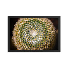 Load image into Gallery viewer, Cactus Spiral Symmetry - Framed Print