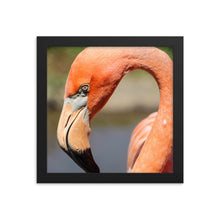 Load image into Gallery viewer, Flamingo Photo - Framed Print