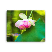 Load image into Gallery viewer, Pink Flower Water Lily Reflection - Canvas Print