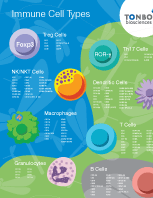 "Immune Cell Types Poster (19"" x 27"")"