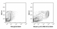C57Bl/6 bone marrow cells were stained with 0.06 ug Biotin Anti-Mouse Ly-6G (30-5931) (right panel) or 0.06 ug Biotin Rat IgG2b isotype control (left panel) followed by Streptavidin FITC.