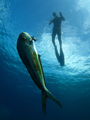 3 Days Spearfishing Level 1 - Fusion Freedive and Spearfishing