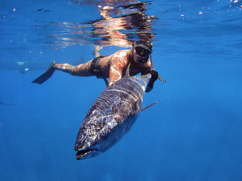 Spearfishing Level 1 - Fusion Freedive and Spearfishing