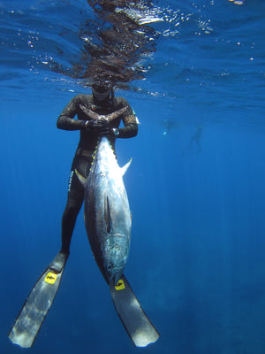 Spearfishing Trip - Fusion Freedive and Spearfishing