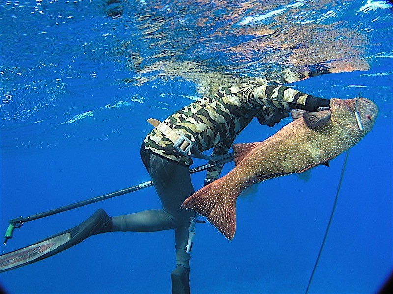 5 Days Spearfishing Advanced - Fusion Freedive and Spearfishing