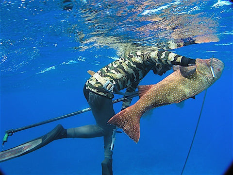 Spearfishing Advanced - Fusion Freedive and Spearfishing